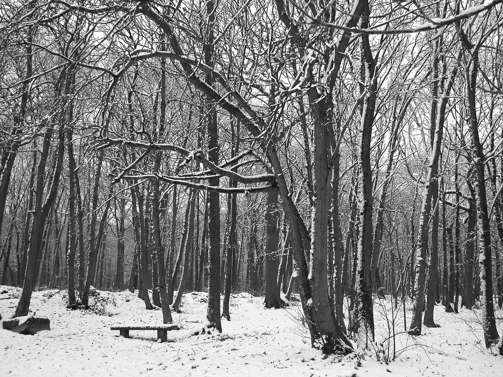 a snow covered forest near Paris, France