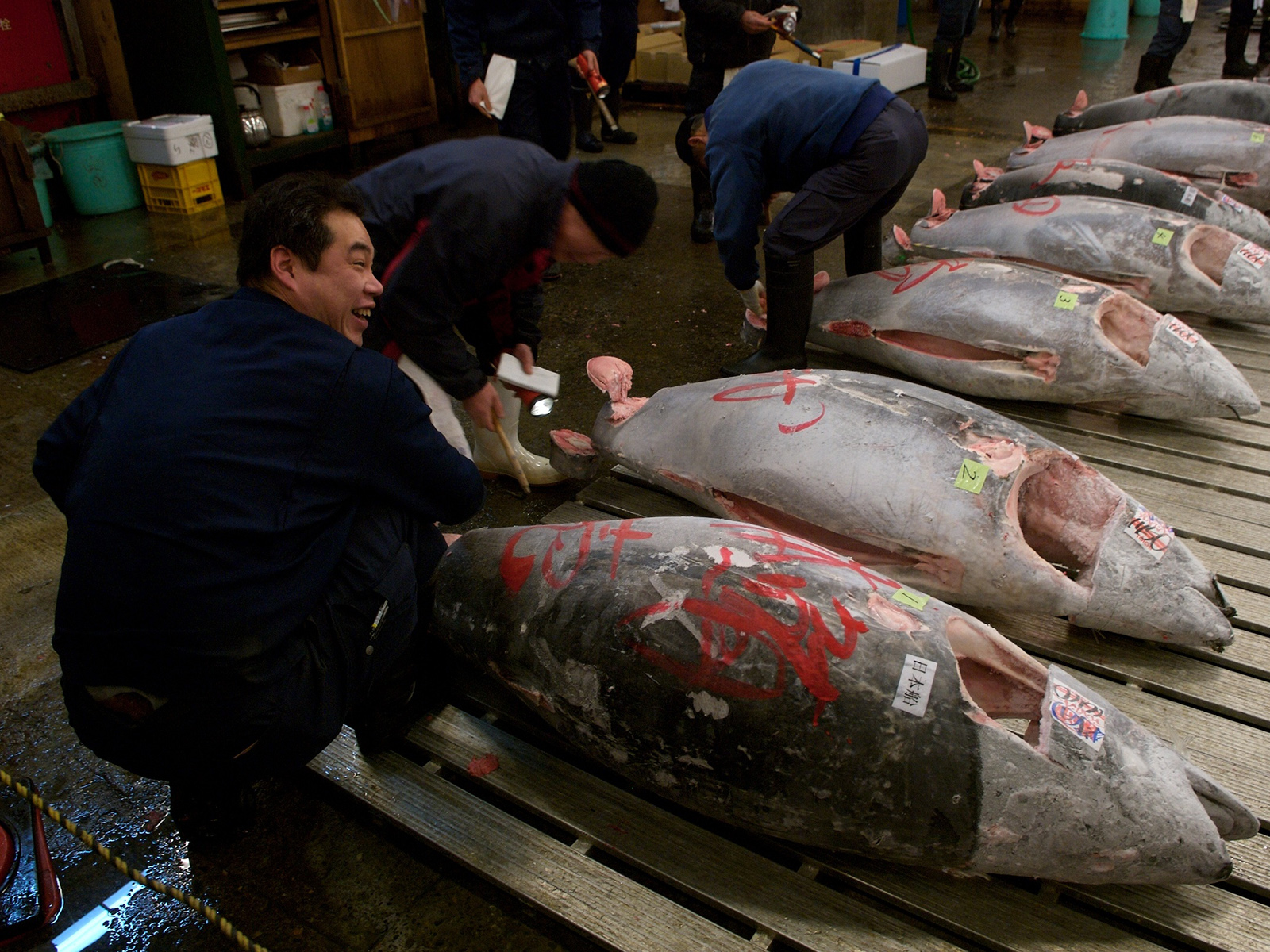 the tuna auction in the early hours of the morning at the fish market in Tokyo, Japan